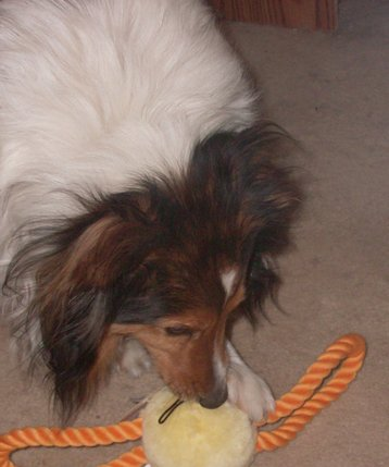 Peyton and his new duck toy