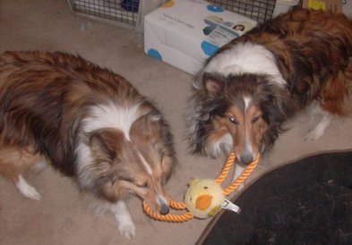 Peyton and Star with Duck Toy