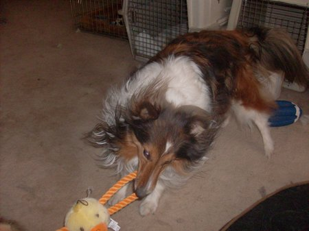 Peyton's end of the duck toy
