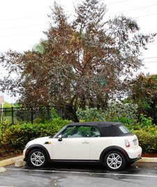 April 2012 Dream SeQueL Trip 001 -Mini that I rented in Fort Lauderdale -1