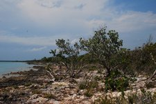 April 2012 Dream SeQueL Trip 052 -Looking along the shoreline at Little Sale Cay, Bahamas